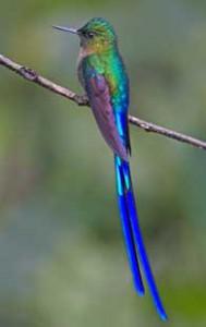 見る角度によって色が変わるハチドリも絶好の被写体です。