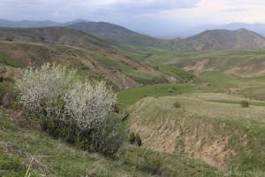 5月初旬はバラ科の花木の最盛期。アルメニアらしいのどかな景色です。