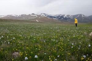 プシュキニア、ガゲア、シラーなどの花々がはるか遠くの山裾まで広がります