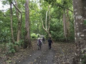 タンココ自然保護区の海岸沿いの熱帯林