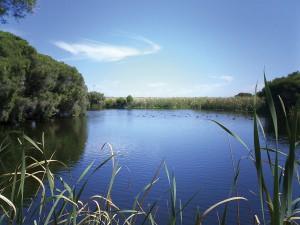 カモなどの水鳥が遊ぶハーズマン湖の湿地