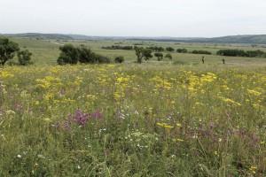 オミナエシの草原