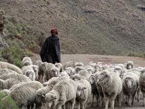 レソトの羊飼い