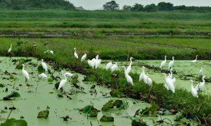 サギ類の群れ 撮影:柳澤隆様