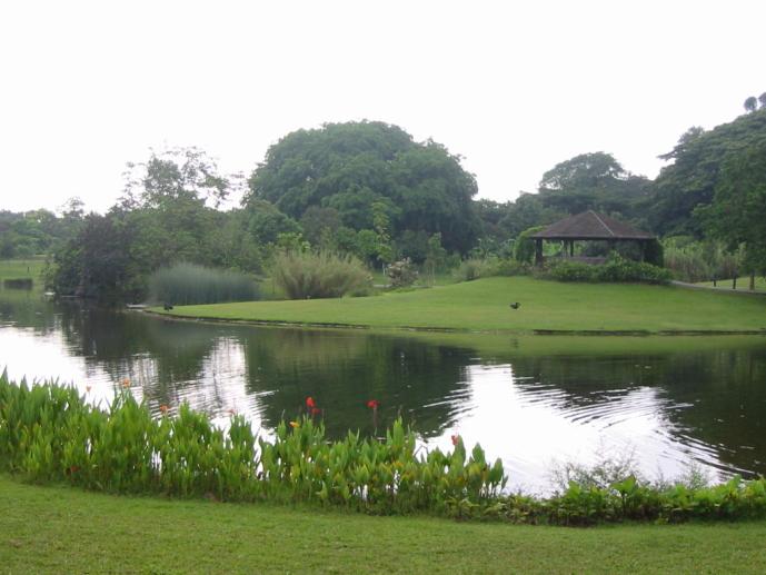 シンガポール植物園の画像 p1_28