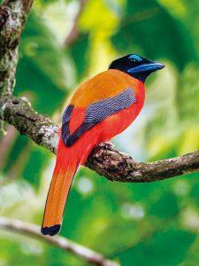 コシアカキヌバネドリなど森林に生息する種も探します