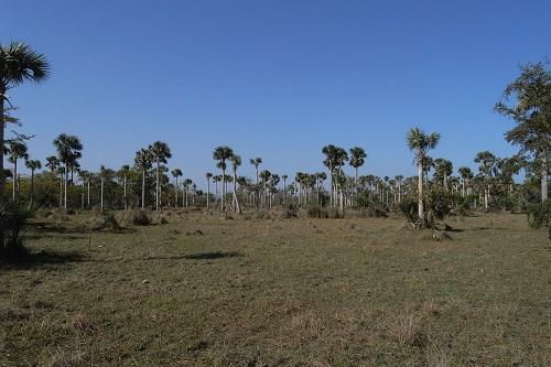 ザパタ湿地の一部雨季になるとここは水没します(ツアーは乾季です)